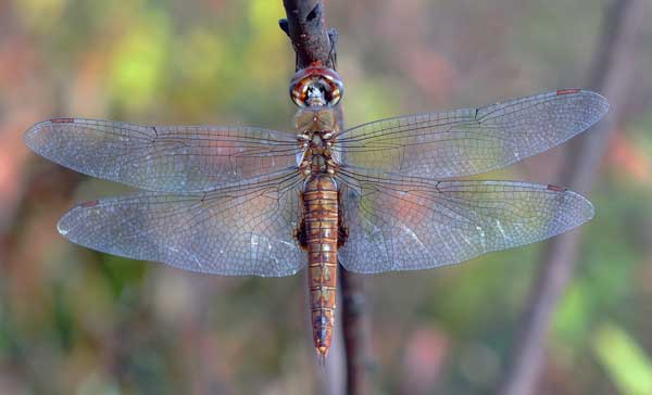 Dragon-Fly-inner-guidance-page