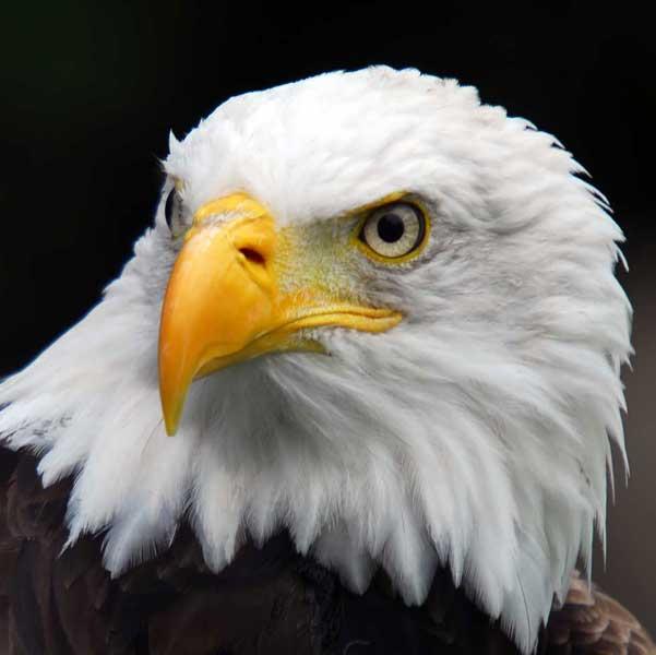 Eagle-Vision2-store